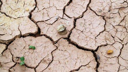 Метеоролог предупредил об угрозе летней засухи в Воронежской области