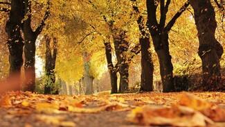 После самой холодной октябрьской ночи в Воронеж придёт потепление