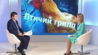 В региональном Управлении ветеринарии объяснили, как в Воронежский зоопарк мог попасть вирус птичьего гриппа