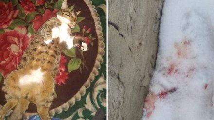 Жительница Воронежа пожаловалась на соседа, отстреливающего из пневматики котов