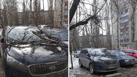 Воронежцы сообщили о 5 рухнувших из-за мощного ветра деревьях