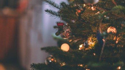 В воронежских лесах усилили охрану ёлок перед Новым годом