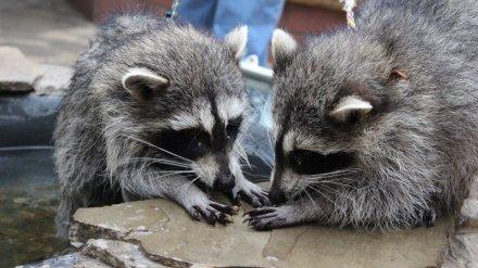Воронежский зоопарк закрылся для посетителей