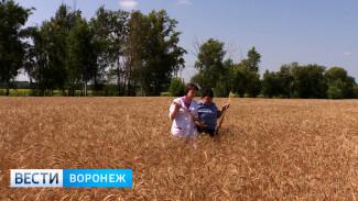 Воронежские аграрии: Холодное и дождливое лето-2017 может войти историю региона