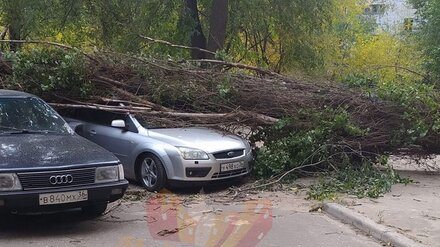 Воронежцы сообщили о 24 рухнувших во время сильнейшего ветра деревьях