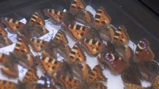 Под Воронежем открылась уникальная «литературная» выставка бабочек