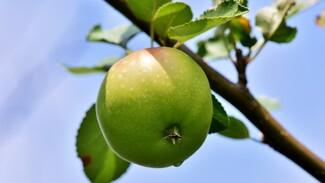 В Воронеже подвели итоги торгов на застройку яблоневых садов