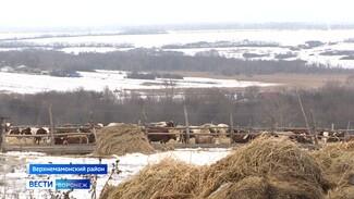 Ферма, мастерские и школа. Как развивается Верхнемамонский район