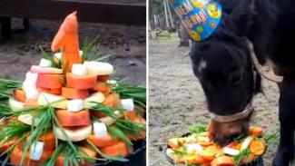 Воронежский зоопитомник поздравил пони с днём рождения тортом и милым видео
