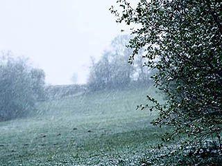 15 и 16 мая в Воронежской области ожидаются морозы