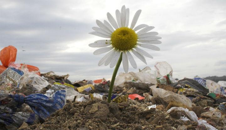 «Зелёный патруль» назвал место Воронежской области в рейтинге самых чистых и грязных регионов
