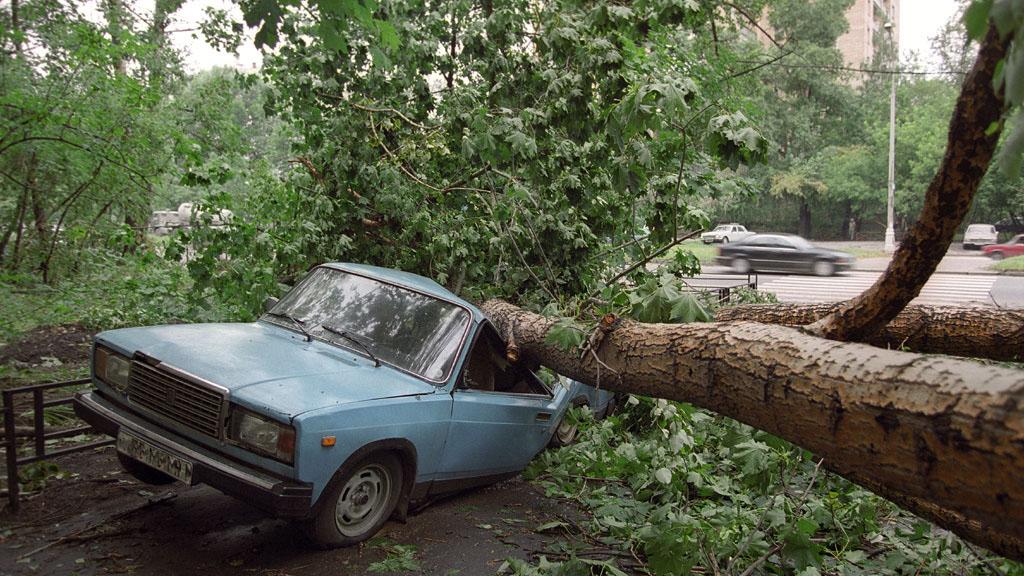 Что делать, если на машину упало дерево – инструкция
