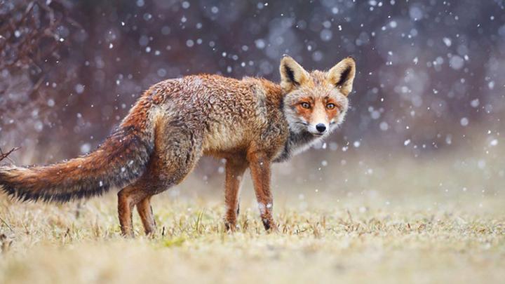В Воронежской области в первые дни ноября ожидается снег с дождём