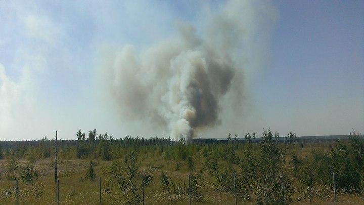 В микрорайоне Отрожка Воронежа загорелась лесная подстилка