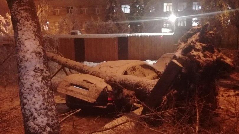 Воронежцы сообщили о десятках рухнувших на машины деревьях
