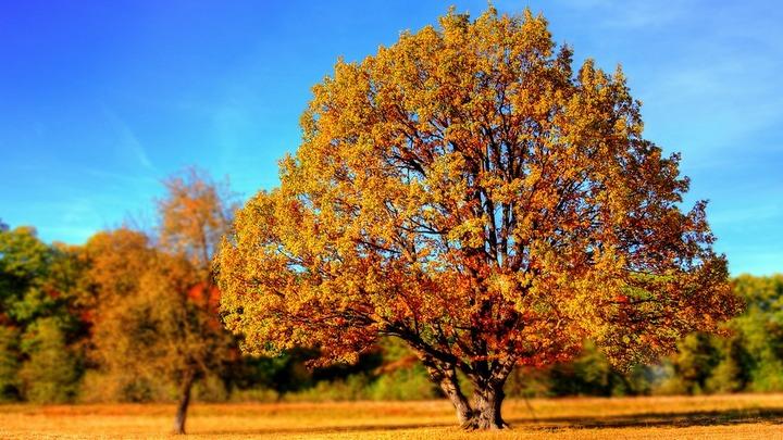 Метеорологи рассказали, когда «бабье лето» закончится в Воронежской области