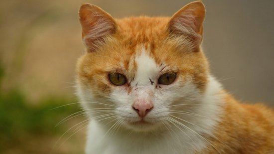Карантин по бешенству животных объявили ещё в 4 населённых пунктах Воронежской области