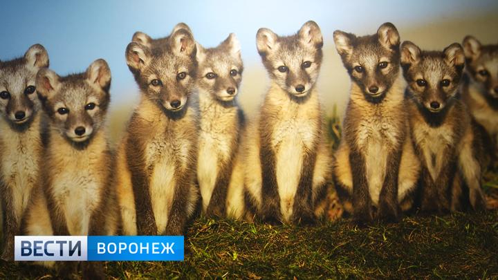 В Воронеже открылась крупная международная фотовыставка, посвящённая дикой природе