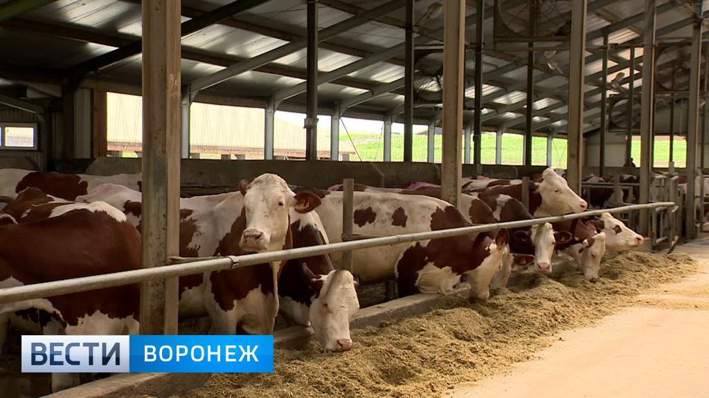 «Молвест» объявил о строительстве ещё двух ферм в Воронежской области