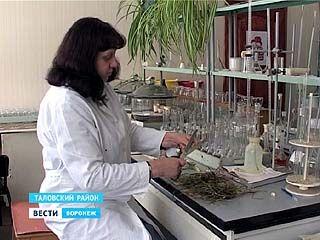 40% озимых посевов в Воронежской области - в хорошем состоянии