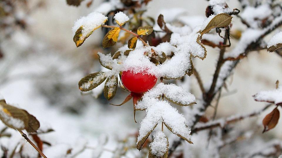 Метеорологи рассказали, когда в Воронежской области пойдёт первый снег