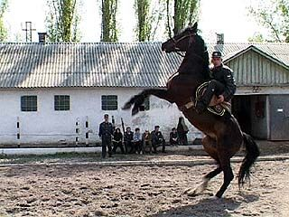 50 лошадей ежедневно помогают стражам порядка в работе