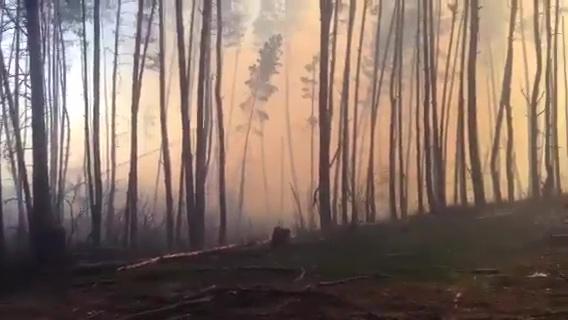 Под Воронежем пожар на площади около 1,5 га попал на видео