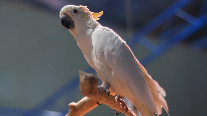 Воронежский зоопарк завершил реконструкцию зала птиц
