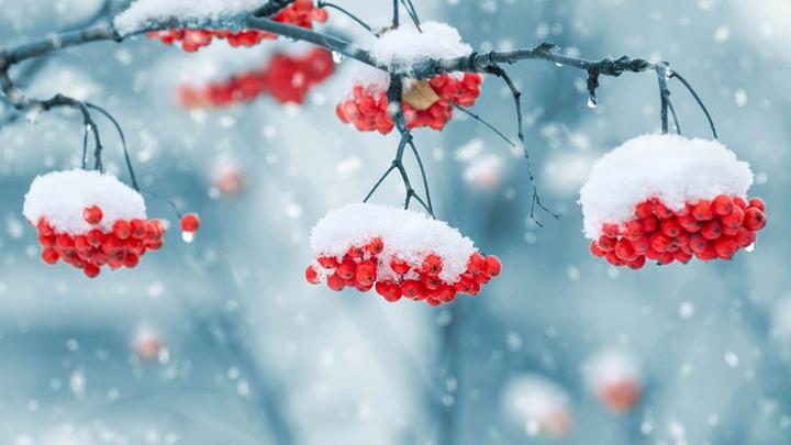 В Воронежскую область к концу рабочей недели обещает вернуться морозная погода