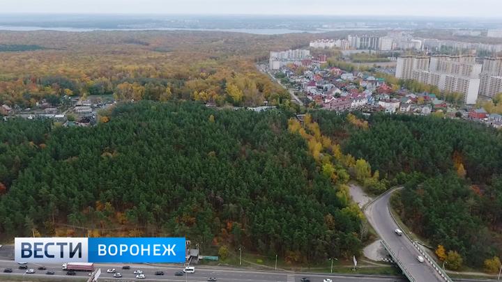 Для строительства дороги через Нагорную дубраву в Воронеже придётся вырубить 2 км леса