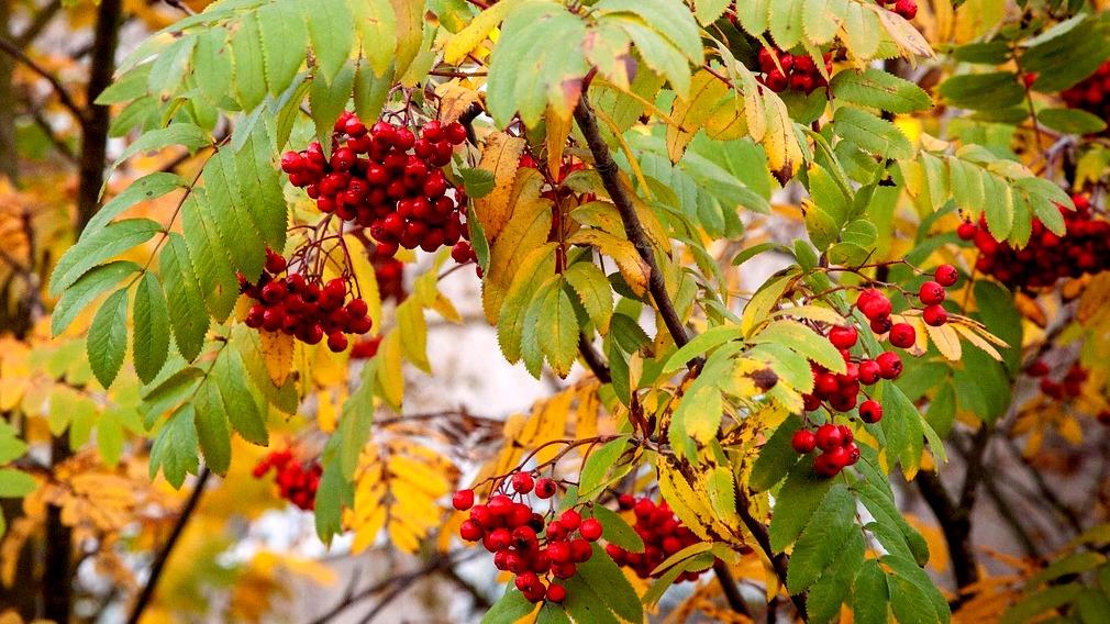 Метеорологи: «Начало ноября в Воронежской области будет аномально тёплым»