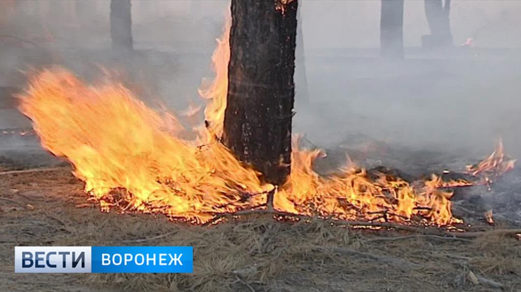 В 4 районах Воронежской области объявлен 5 класс пожароопасности