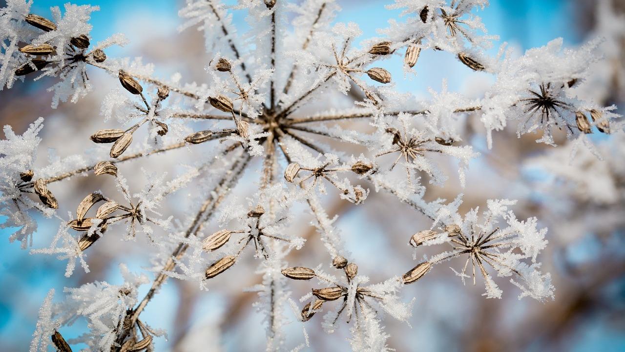 Мороз и солнце вернутся в Воронежскую область на рабочей неделе