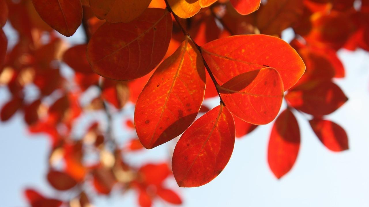 Метеорологи рассказали о длительности «бабьего лета» в Воронежской области