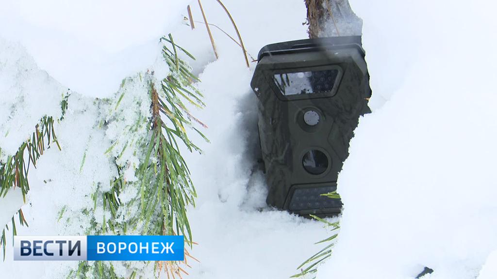 Охранять хвойные деревья воронежским лесникам помогут фотоловушки