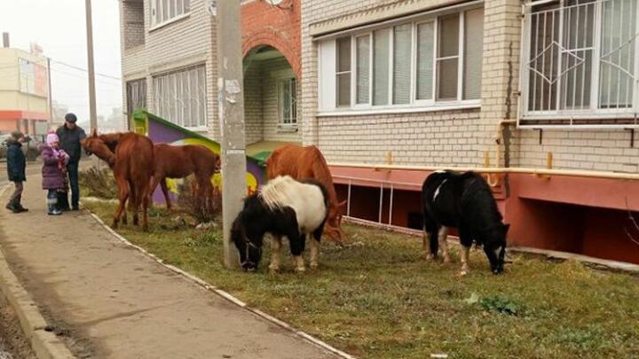 Воронежцы сообщили о сбежавших из конюшни лошадях