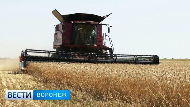 Воронежской области увеличили объем субсидий на создание объектов АПК