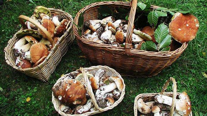 В Воронежской области 4 человека стали жертвами отравления грибами