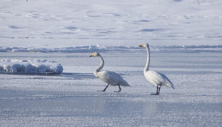 Cотрудники экстренных служб предупредили граждан Воронежской области осмертельной опасности тонкого льда