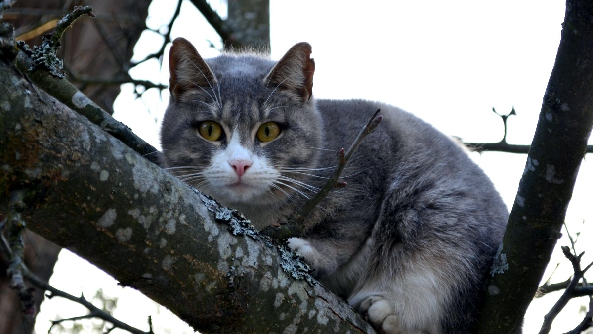 Операция по спасению сидевшего на дереве кота в Воронеже попала на видео