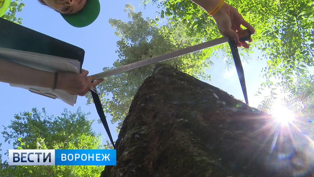 Экологи: Более 3 тысяч деревьев в Воронеже требуют замены