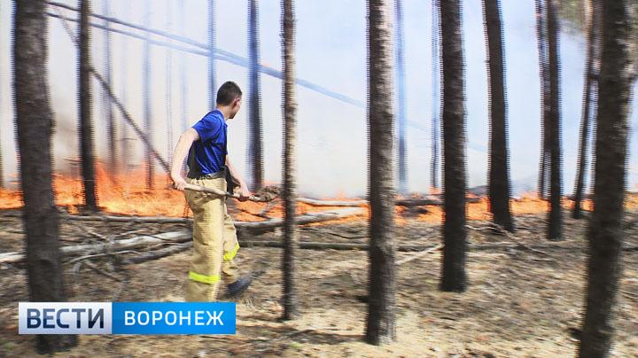 Спасатели рассказали, что спасло воронежцев от более крупных пожаров