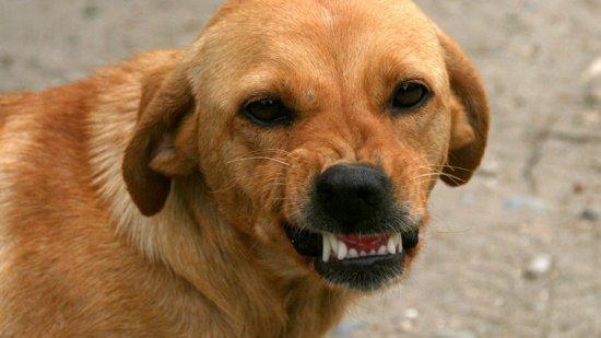 В воронежском микрорайоне ввели карантин по бешенству животных
