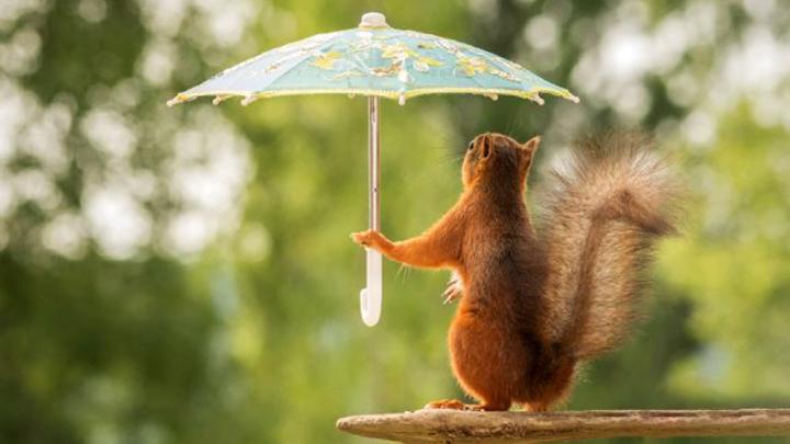 В Воронежской области на этой неделе ожидаются пасмурная погода и потепление до +22