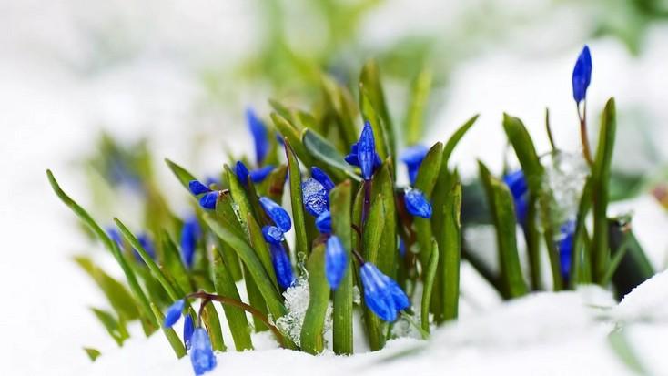 Метеорологи дали прогноз на первый месяц весны в Воронежской области