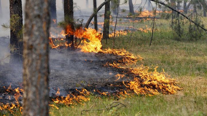 Стала известна дата введения особого противопожарного режима в Воронежской области