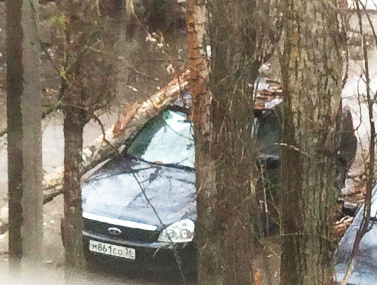 В Воронеже деревья падают на машины и проезжую часть