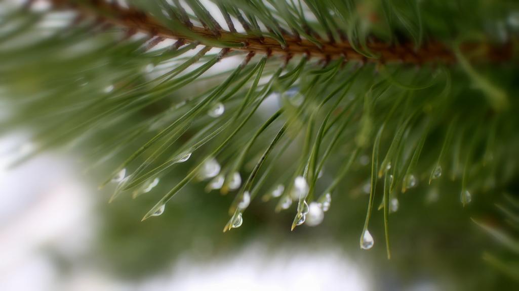 Прогноз погоды на 18.12.17
