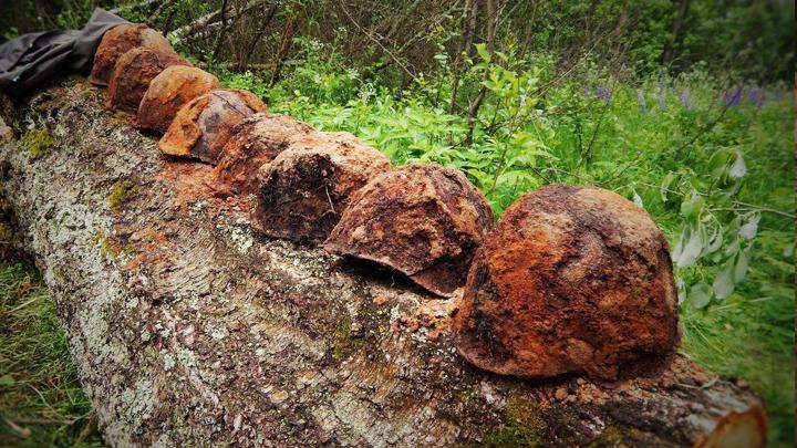 Поисковики приступили к розыску родственников погибшего воронежского красноармейца