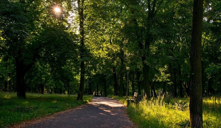 В Воронеже статус особо охраняемых природных территорий присвоили еще 14 зелёным зонам